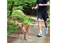 Dog Jogging Service