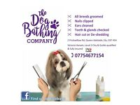 Dog grooming in Ely, Cambridgeshire