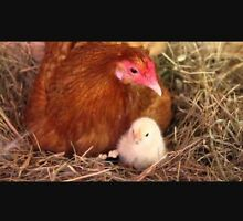 WANTED chicks, chickens Thomastown Whittlesea Area Preview