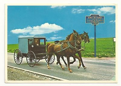 BIRD IN HAND PA Double-Tree Hitch Amish Horse Team PC