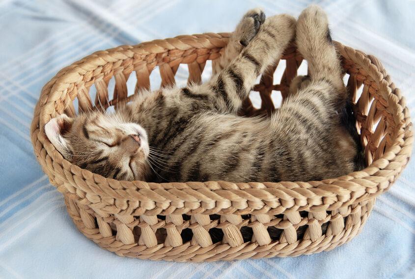 Top 3 Cat Bed Brands