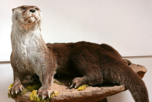 The Complete Guide to Buying Taxidermy Animals