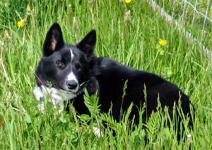 Adopt Dogs & Puppies Locally in Canada | Pets | Kijiji Classifieds