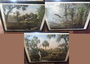 Beautiful Bird Puzzle Pictures framed