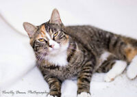 SNAPPLE is available for ADOPTION at the OSPCA RENFREW COUNTY!