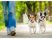 Daytime dog walking service - Chapel Allerton - £10 per hour