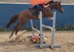 Hunter/Jumper for sale