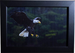 Awesome High Quality Prints! (Wildlife, city, nature, and more!) Cambridge Kitchener Area image 1