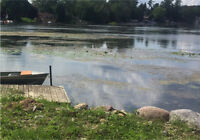 Help wanted clearing lake weeds
