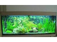 Juwel Rio 240 Full Fish Tank Set