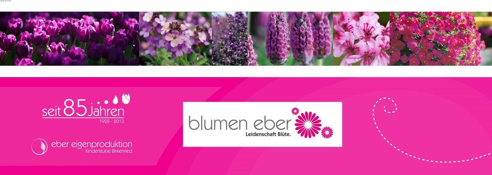 www.blumen-eber.de
