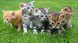 FREE INTRO VISIT ☆Pet / Catsitter ☆ Reliable, Mature and Experienced - N1 Islington and Surrounds