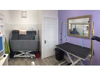 Dog Grooming Salon now open in Paddock Wood