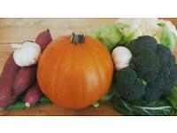 Allotment plot free Vegetables