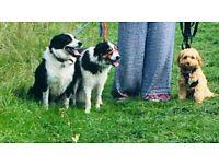 Dog Walker - First walk FOC