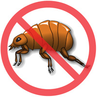 Want to get rid of FLEAS in your home?  I can help....safe and