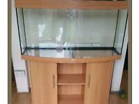 large jewel pine beach fish tank