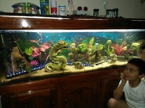 6 foot fish tank - with fish and accessories Glenelg Holdfast Bay Preview