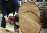 Chainsaw Safety Course