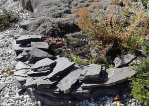 Plants and Rocks Free to a Good Home