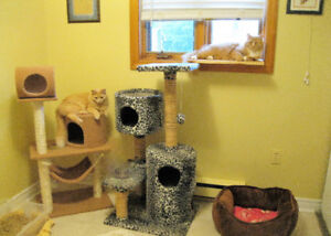 CAT BOARDING CAGE FREE WITH A/C - $10.00 PER NIGHT  =^..^=