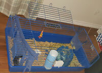 2 adult female guinea pigs for sale