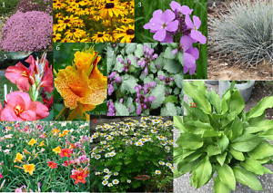 Coming Soon Perennials and annuals for your garden plants flower