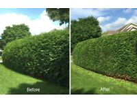 Hedge trimming- Grass cutting -Garden tidy up-Lawn mowing-Gardening services-Local gardener
