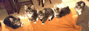 URGENT URGENT RESCUED 5 STUNNING SIBLINGS LOOKING FOR EVER HOMES Riverwood Canterbury Area Preview