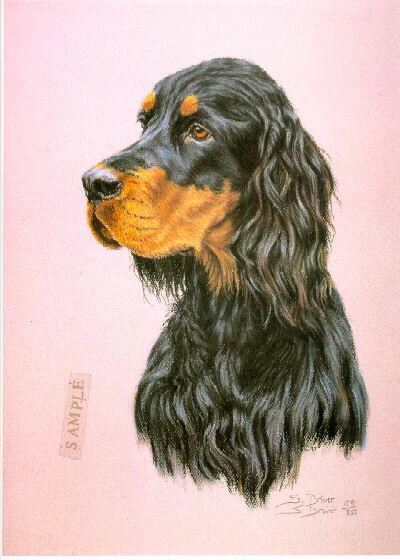 Gordon Setter Head Study Limited Edition Art Print by UK Artist Sue Driver #3