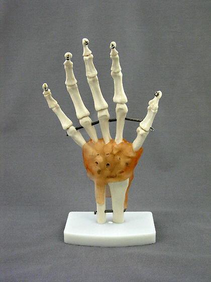 Life-Size Hand Joint Flexible Model w/ Ligaments Anatomical skeletal model NEW