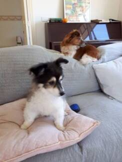 Premium Pet Dogs Cats Home Boarding Nunawading Children Day Care