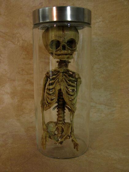 Fetus or Alien Torso in Plastic Jar, Halloween Prop, New