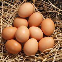 Eggs, brown, all natural, free run