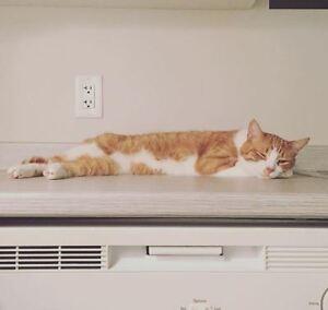 Adventurous Male Cat (neutered)!