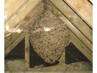 Wasps Destroyed