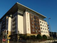 1 bed flat in Latitude 52 to rent.
