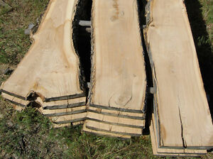 Various sizes Ontario native trees, live and milled lumber.