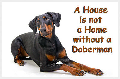 Doberman Pinscher Dog Fridge Magnet New Dobie Birthday Gift