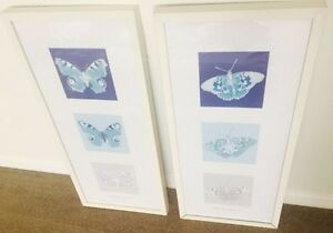 Butterfly picture frames need to sell ASAP Moorabbin Kingston Area Preview
