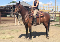 Big beautiful work gelding.