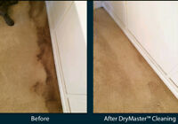 Professional Deep Carpet and Upholstery Cleaning 50% off Rugs!