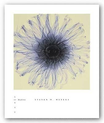 PHOTO FLORAL ART PRINT Dahlia by Steven Meyers ()