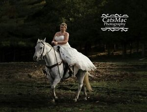 Registered Quarter Horse Mare Peterborough Peterborough Area image 1