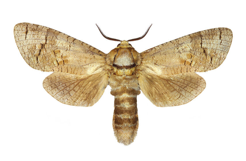 Your Guide to Starting a Moth Collection