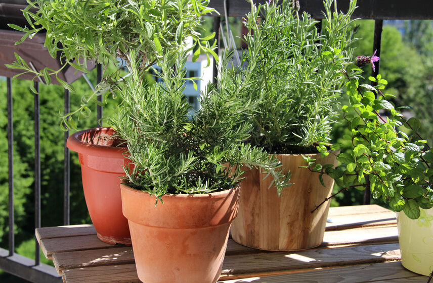 How to Make a Balcony Herb Garden eBay