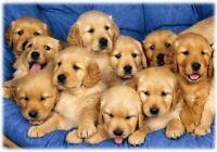 Pension pour petits chiens les milles_pattes