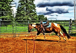 Horse Round pen panels individually or complete pricing.