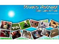 Daycare 4 pets professional dog walkers and pet sitters