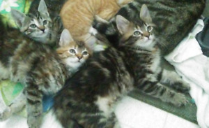 PLAYFUL KITTENS LOOKING FOR FOREVER HOMES